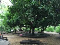 The mango tree hangout spot